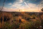 Desert Life by tanikel