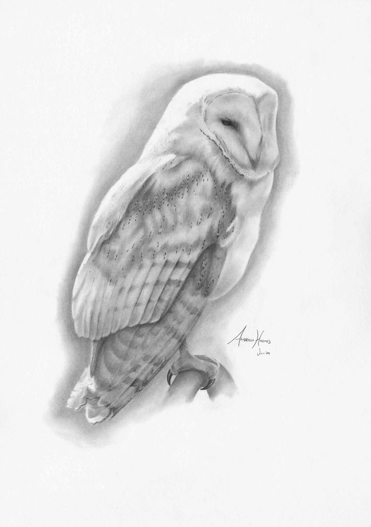 Barn Owl by Captured-In-Pencil on DeviantArt