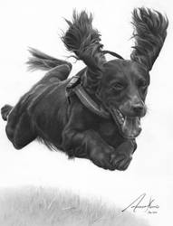 Commission - 'Flying' Cocker Spaniel by Captured-In-Pencil