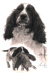 Commission - Springer Spaniel with Pheasant by Captured-In-Pencil