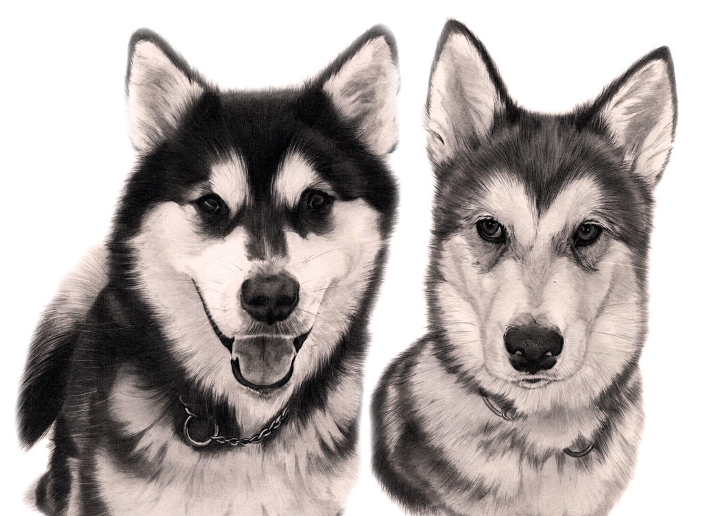 Commission - 2 Alaskan Malamutes by Captured-In-Pencil