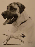 Commission - Anatolian Shepherd by Captured-In-Pencil