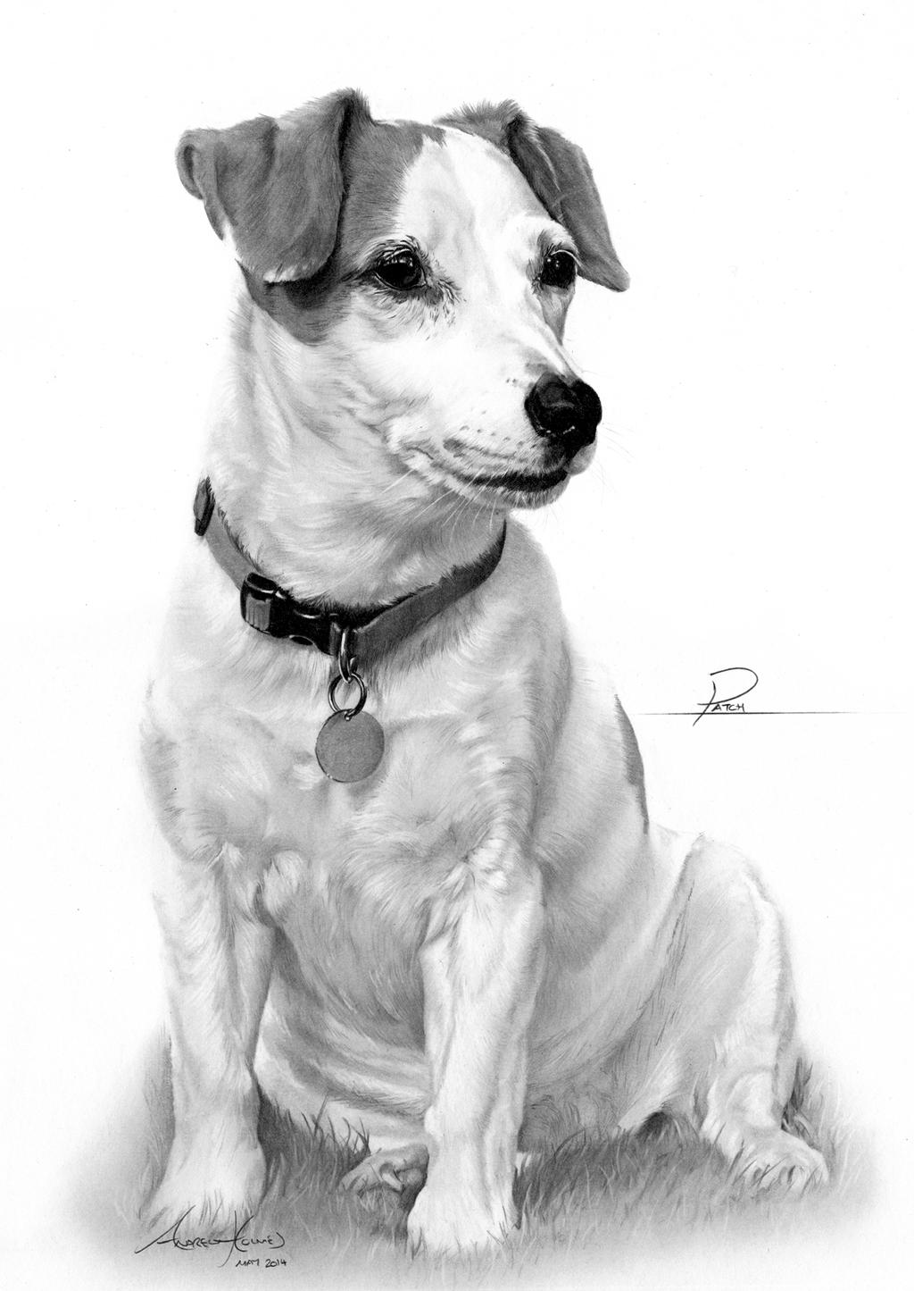 Commission Jack Russell Terrier By Captured In Pencil On
