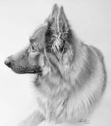 Commission - German Shepherd by Captured-In-Pencil