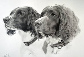 Commission - Springer Spaniels Luci and Max by Captured-In-Pencil