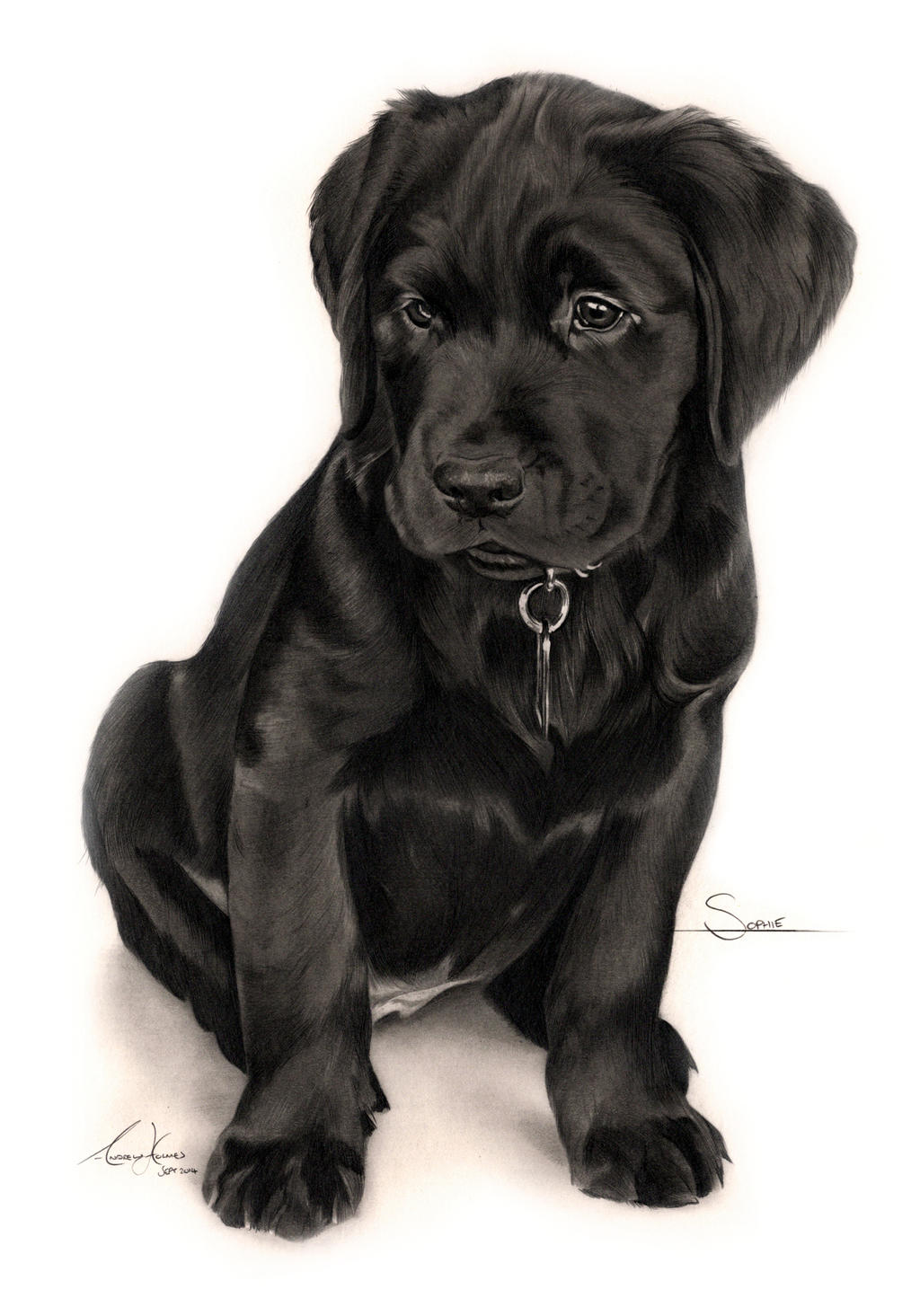Commission - Black Labrador Puppy U0026#39;Sophieu0026#39; By Captured-In-Pencil On DeviantArt