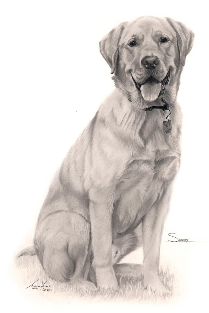 Commission - Golden Lad/Retriever 'Sparkey' by Captured-In-Pencil