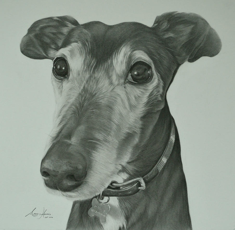 Commission - Greyhound 'Hannah' by Captured-In-Pencil