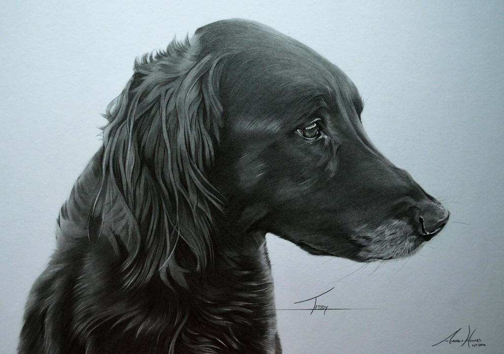 Commission - Retriever/Collie cross 'Teddy' by Captured-In-Pencil