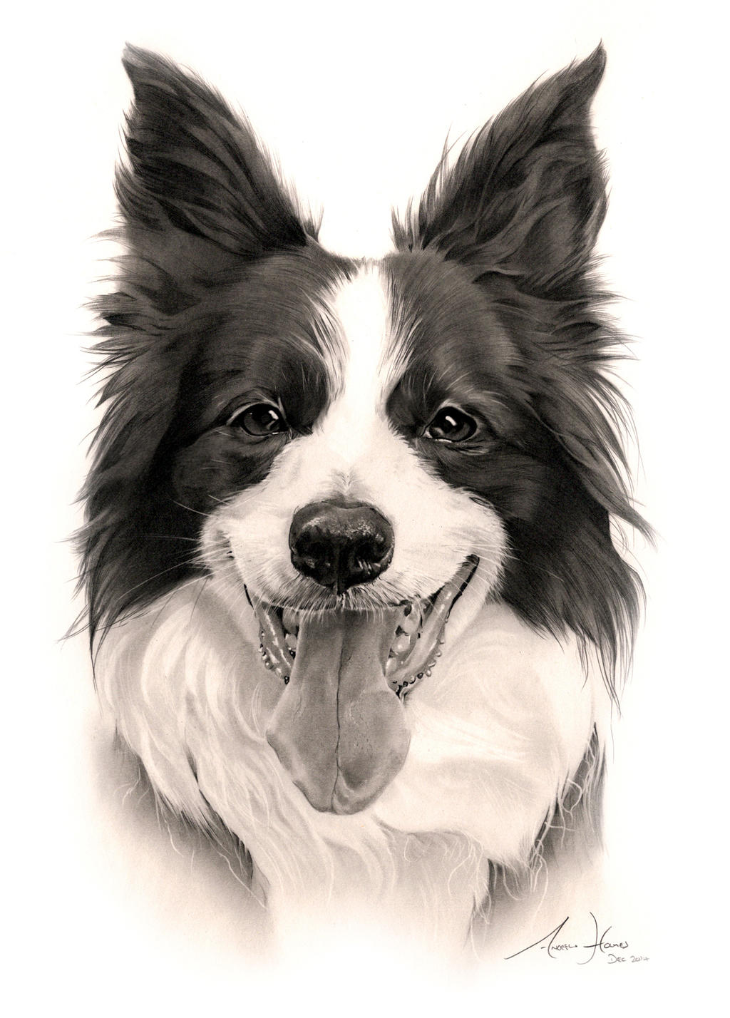 Commission - Border Collie U0026#39;Maggie Mayu0026#39; By Captured-In-Pencil On DeviantArt