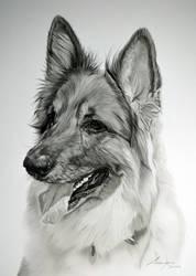 Commission - German Shepherd 'Willow'