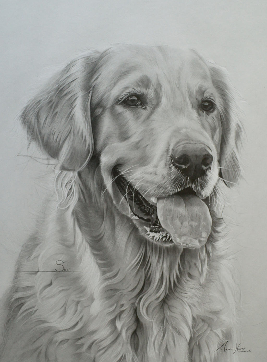 Uncategorized Golden Retriever Drawings commission golden retriever skye by captured in pencil on by