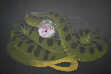 anaconda by leonsamar