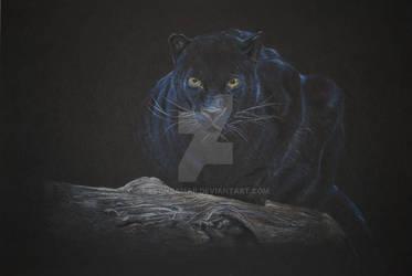 Pantera by leonsamar