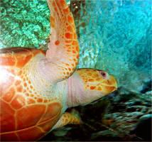 Sea Turtle by BeautifulDragon322