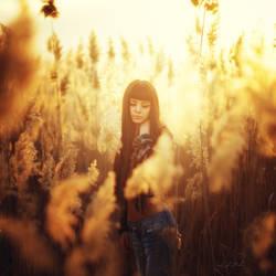 sunny dreams by intels