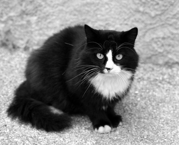 chat noir et blanc by saultrider on deviantart. Black Bedroom Furniture Sets. Home Design Ideas