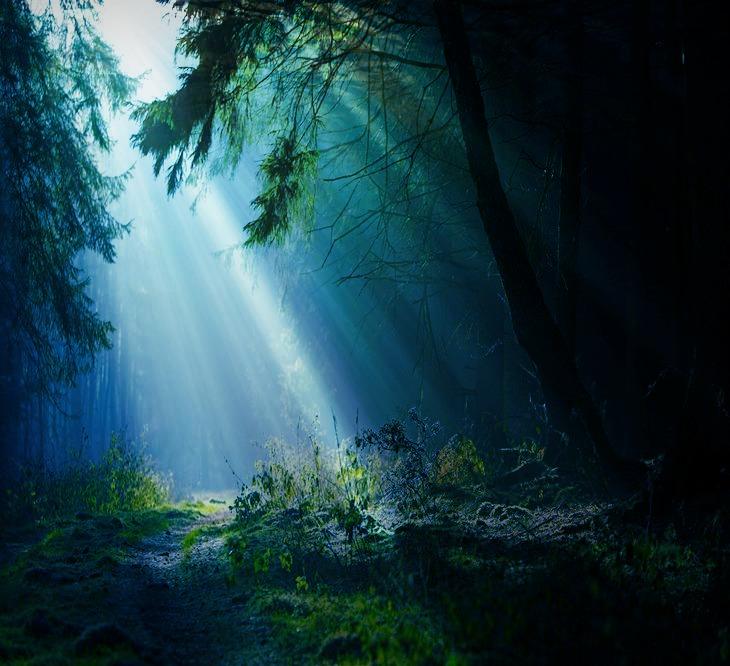 Dark Forest by manilu