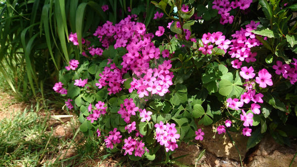 Flowers by manilu