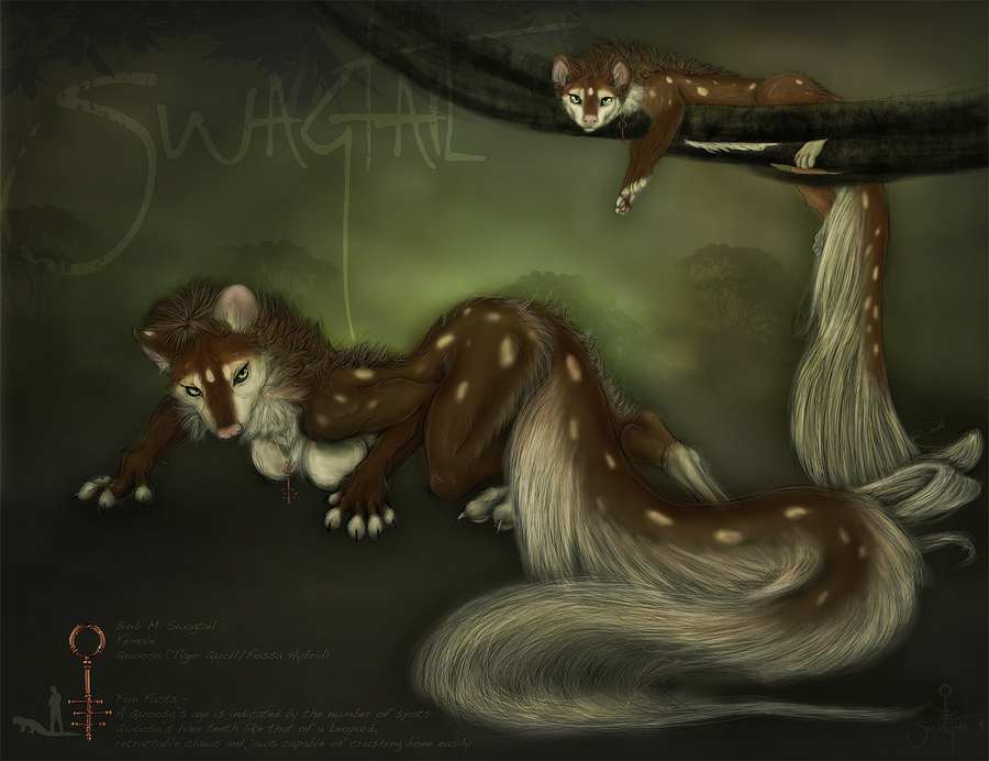 Ref - Bindi Swagtail by Swagtail