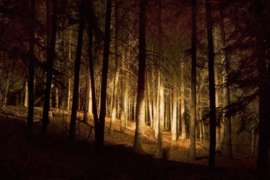 the light in the forest analysis Forest fires forest fires have been around since the dawn of time without fires to burn out the underbrush, the baby sequoias will not get the sun light.