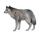 Pixel wolf by jayuu