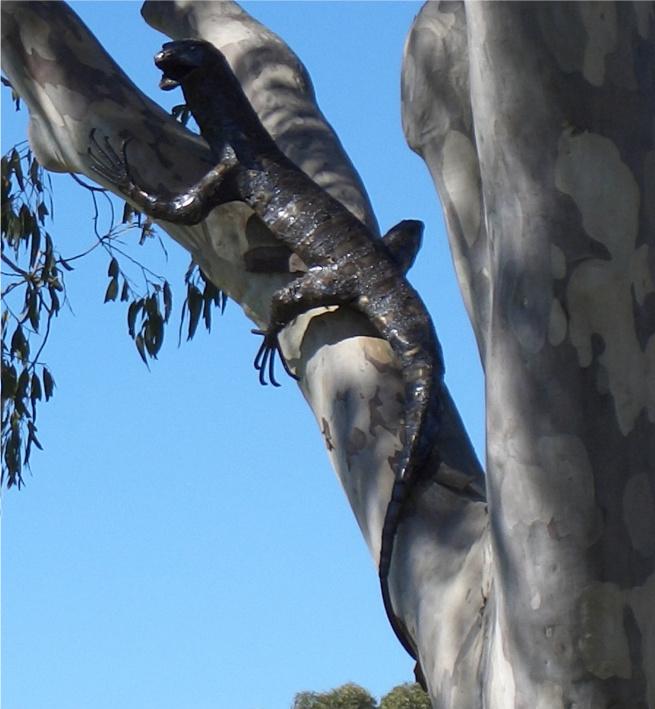 Goanna up a gum tree