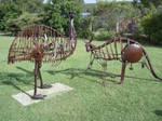 Animals in my backyard