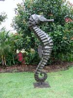 Seahorse 2 by jimcross