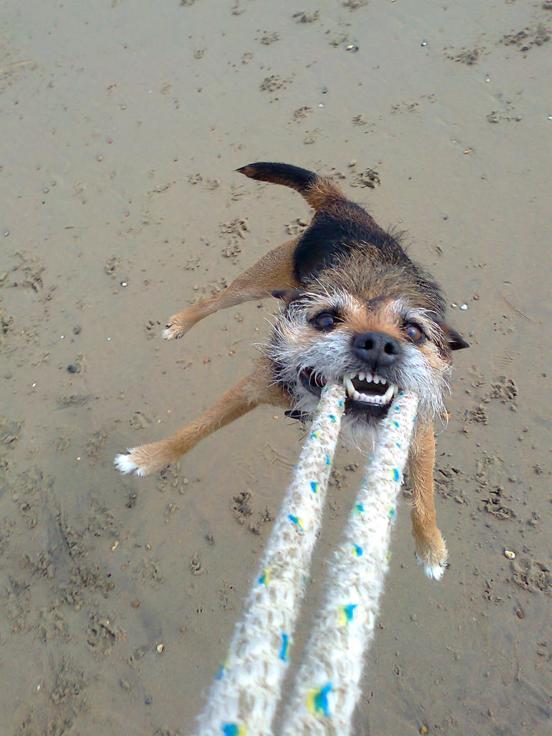flying dog 2 by montyfrog