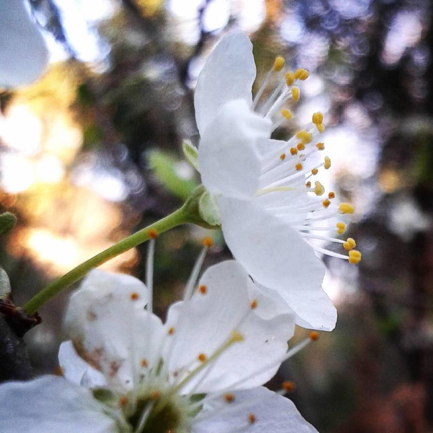 Messenger of spring by Oclius