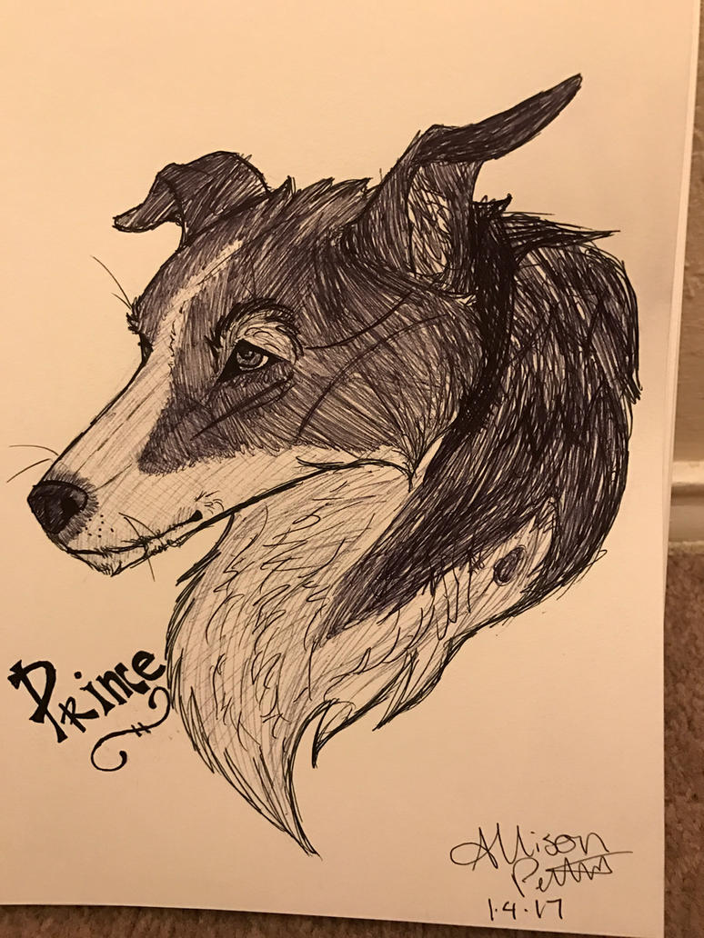 DAY 4 of 365 - My Dog Prince by FatesSpirit