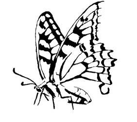 Shadowfly by mothrakaiju