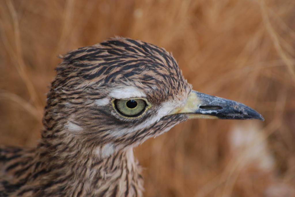 http://fc00.deviantart.net/fs46/i/2012/160/0/1/bird_by_marilynfaye-d241hv2.jpg