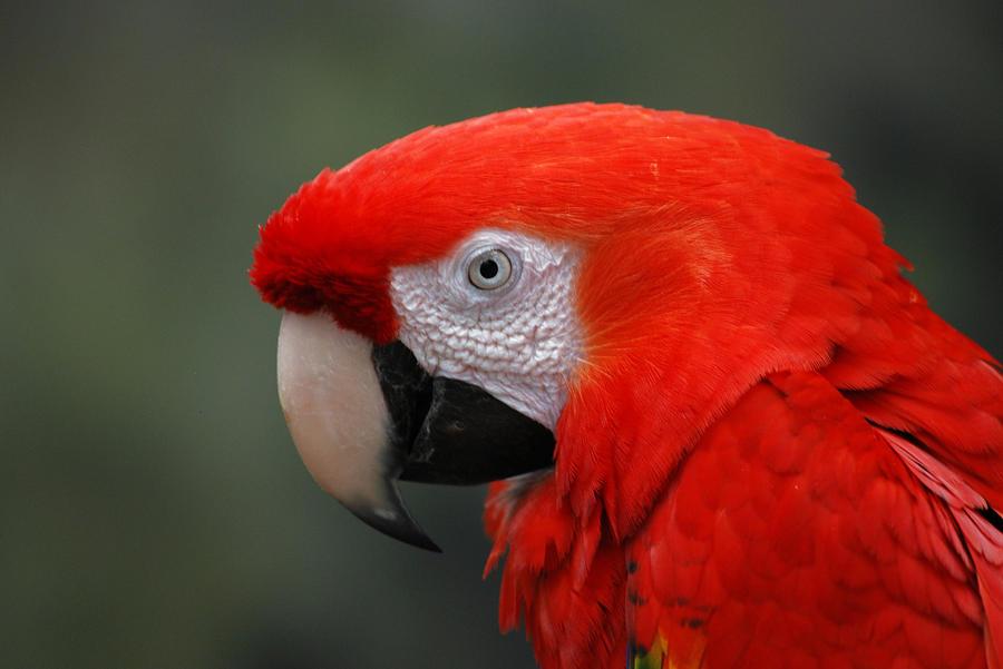 http://fc07.deviantart.net/fs71/i/2012/122/0/5/macaw_by_marilynfaye-d4y9ntw.jpg