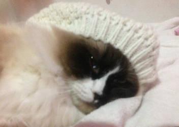 Cat in the Hat by PinkieShyFIM