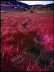 The Red Grass