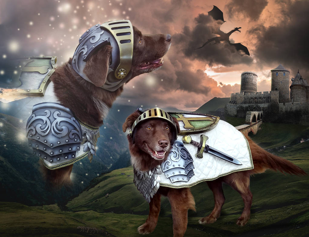 Sir Brodo, The Goodest Boy in all the Realm