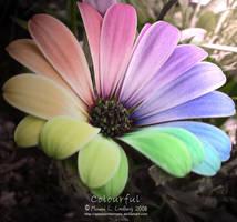 Colourful by mimmilinnea
