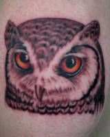 owl by unclejosh100