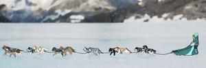 Team Arctic Striders :Iditarod Training: