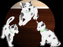 Winnie - Puppy Training by CC-Kennel