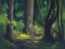 Quiet Woodland Path Study by JMNeedhamArt