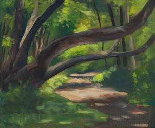 Dappled Light, The Fallen Tree by JMNeedhamArt