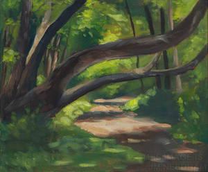 Dappled Light, The Fallen Tree