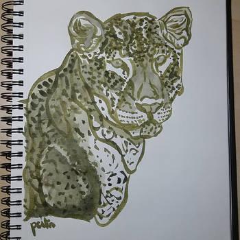 Panthera pardus by pcitr