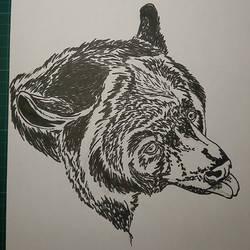 Ursus americanus by pcitr