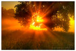sun by werol