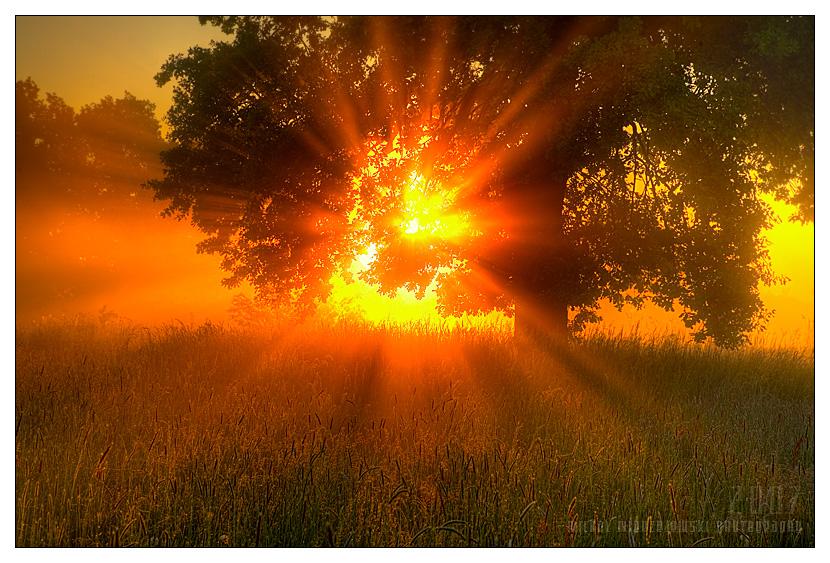 sun_by_werol.jpg