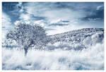 snow white by werol